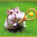 hamster-tennis